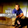 <p></p><p>Leader of the Pack: The Charisma of <em>The Dog Whisperer</em>
