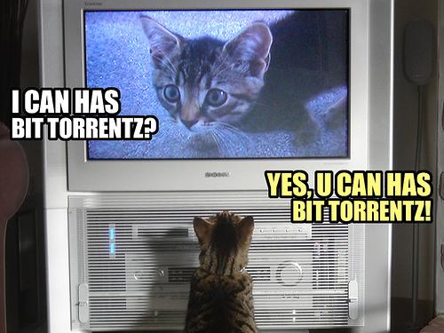 Bit Torrent Catz
